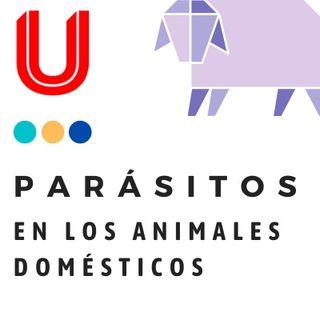 Parásitos en los animales domésticos