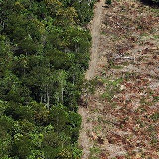 Come stanno le foreste della Terra