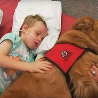 Non sembravano più esserci speranze per questo bambino ma quando il cane si è avvicinato a lui...