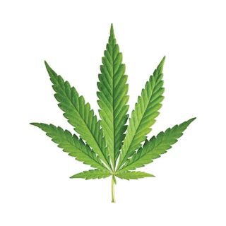 Weed Talk!! Shizzy's Lit Podcast