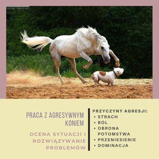 Live 12: Agresywny koń