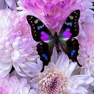 Buongiorno in connessione alla farfalla!