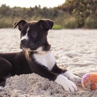 Separazione: come comportarci con gli animali da compagnia