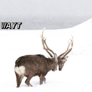 WAYT EP. 138