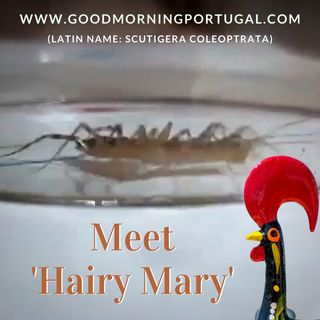 Portugal news, weather & today: bread (cont.), hairy marys & holidays