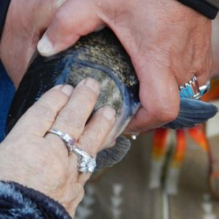 For Klamath Tribes, Suckerfish Mean Renewed Life