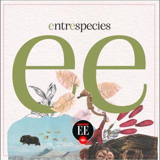 Los invitamos a conocer Entrespecies