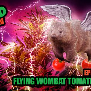 404: Flying Wombat Tomato Babies