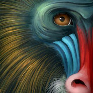 14Apr18 - Top Ten Monkey - p4