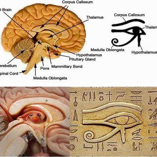 Occhio di Horus - L'Archetipo - VEDERE - Parte II [simboli e archetipi]