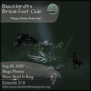 Mega Phoney Slime Mold Is King - Blackbird9 Podcast