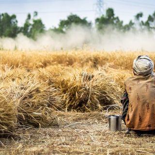 Laudato sì: cibo per tutti in una economia globale