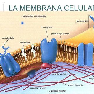 Aspectos generales célula
