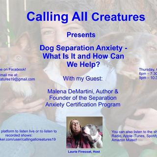 Calling All Creatures Presents Dog Separation Anxiety, What Is It and How Can We Help?
