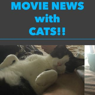 """""""Monday Movie Talk With Cats"""""""
