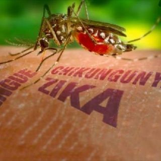 El regreso de America Latina - Zika