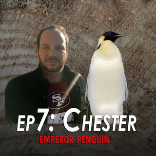 7 - Chester the Emperor Penguin