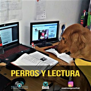 NUESTRO OXÍGENO Perros y lectura-Valeria Bedoya-Alternativas ecologicas al trasnporte urbano-Armando Carabali