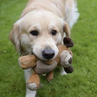 ¿Sabía que...?:Episodio 1:¿Cuáles son los perros más inteligentes?