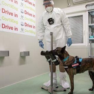 Cani capaci di fiutare il Covid