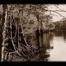 Chancy Fox: A Louisiana Creature Story