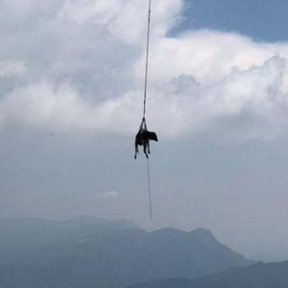 Mucca finisce nel dirupo: la salvezza arriva in elicottero – VIDEO