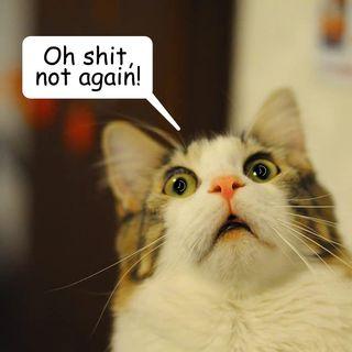 Il gatto di Schrödinger, vivo o morto, è pur sempre Vita