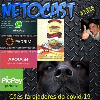 NETOCAST 1316 DE 29/06/2020 - Cachorros treinados conseguem farejar pessoas com Covid-19