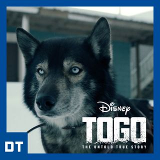 Togo: il tuo più grande amico