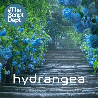 Part 1 | Hydrangea