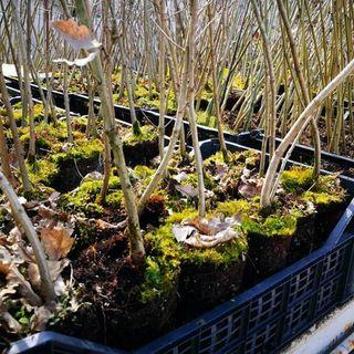 Città più sane con più alberi: la Regione dona 500 piante ai cittadini di Vicenza