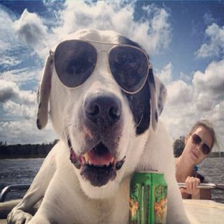 Wie man seinem Hund ein echtes Hundeleben ermöglicht