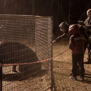 Endangered - Non trasformiamo il mondo in uno zoo