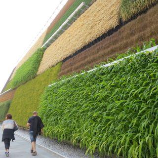 Alimentación, salud y política urbana