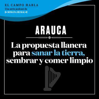Arauca: La propuesta llanera para sanar la tierra, sembrar y comer limpio