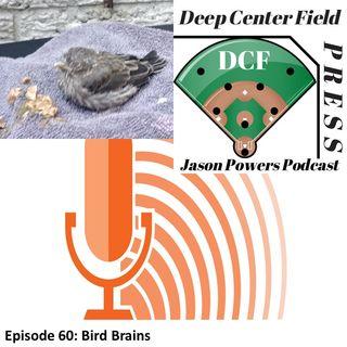 Episode 60: Bird Brains