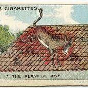 The Playful Ass