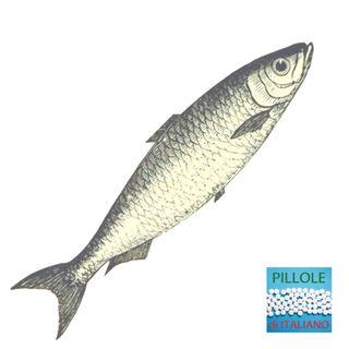 Oggigiorno - Pesce d'aprile