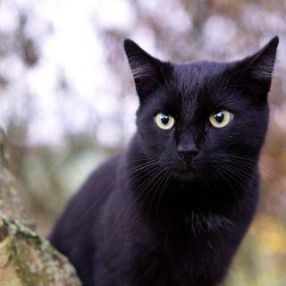 Kara Kediye Selam