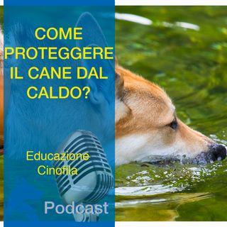 Come Proteggere il Cane dal CALDO