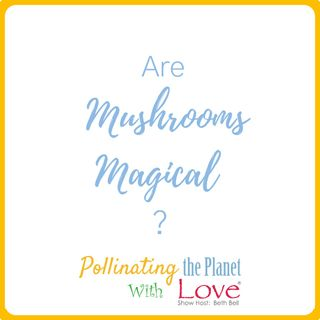 Are Mushrooms Magical?  Guest Louie Schwartzberg