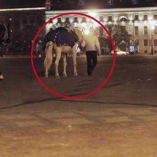 Il suo cavallo sparisce all'improvviso 10 anni dopo scopre il mistero...