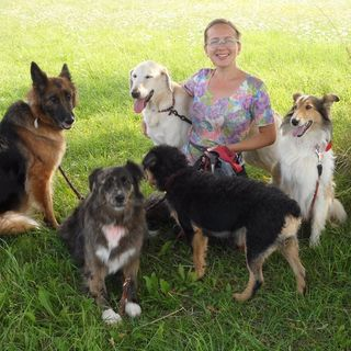 DoggyBoom O psach i dla psów