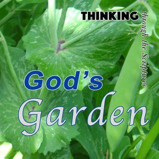 God's Garden (TTTS#13)