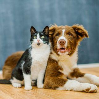Entenda como funcionam as leis de proteção aos animais