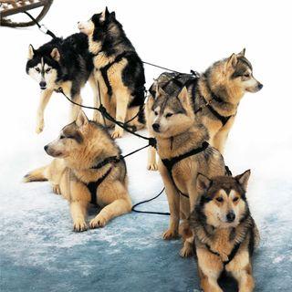 Iditarod sled dog race starts Monday.