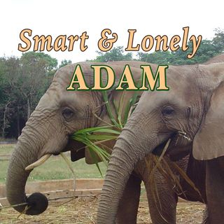 Smart and Lonely Adam, Genesis 2:18-20