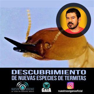 NUESTRO OXÍGENO Descubrimiento de nuevas especies de termitas - Dr. Robin Casalla Daza