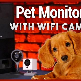 Keep an Eye on Your Pets With WiFi Cameras