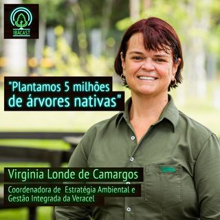 Árvores cultivadas: certificação ajuda na conservação ambiental